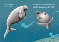 Dhyum The Dugong-7